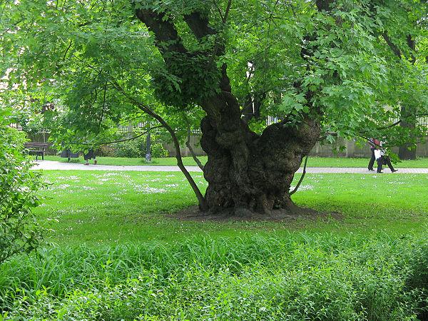 Parks in Riga